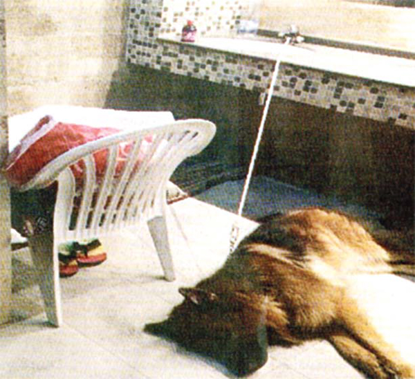 The Kuwaiti citizen and his dog found sleeping in the toilet.