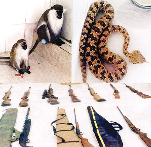 Monkeys and a snake. Below Some of the confiscated guns